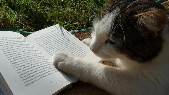 猫の読書 - 電子書籍の読書の期待値とは?